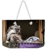 Grey Long Haired Cat Sitting On A Window Sill Weekender Tote Bag