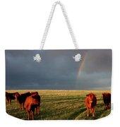 Heifers And Rainbow Weekender Tote Bag by Rob Graham