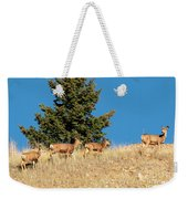 Herd Of Colorado Deer Weekender Tote Bag