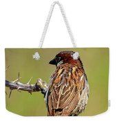 House Sparrow V1818 Weekender Tote Bag