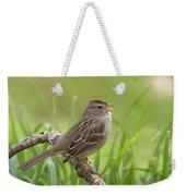 immature White-crowned Sparrow Weekender Tote Bag
