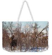 In Ninilchik A Moose Grazes In The Village In Late Winter Weekender Tote Bag