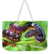 Madagascar Ground Boa Acrantophis Weekender Tote Bag