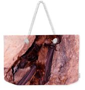 Mexican Free-tailed Bats Weekender Tote Bag