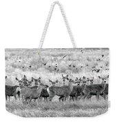 Mule Deer Black And White 01 Weekender Tote Bag by Rob Graham