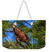 Osprey On Limb Weekender Tote Bag by Tom Claud