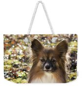 Papillon Sitting In Leaves Weekender Tote Bag