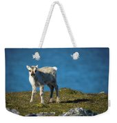 Reindeer Grazing In Spitzbergen Weekender Tote Bag