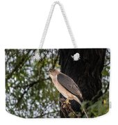 Shikra In The Wild Weekender Tote Bag