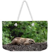 Sleeping Prairie Dog Weekender Tote Bag by Scott Lyons