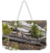 w75 Weekender Tote Bag by Joshua Able's Wildlife