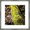 Dead Log With Moss Framed Print