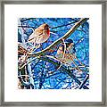 Finch And Blue Jay - California Winter Day Framed Print
