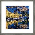 Larch Tree Reflection In Leprechaun Lake Framed Print