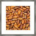 Silkworm Pupae  Framed Print