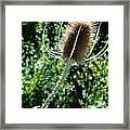 Thistle Plant Framed Print
