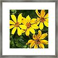 Yellow Texas Wildflowers Framed Print