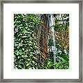 001 Falling Waters For The Cactus Lover In You Buffalo Botanical Gardens Series Framed Print