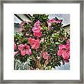 002 Bonsai Summer Show Buffalo Botanical Gardens Series Framed Print