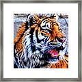 002 Siberian Tiger Framed Print