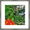 003 Falling Waters Buffalo Botanical Gardens Series Framed Print