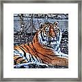 0013 Siberian Tiger Framed Print
