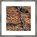 Woods Scene Framed Print