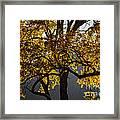 Autumn Abstract Framed Print