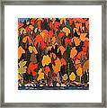 Autumn Foliage Framed Print