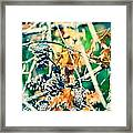 Autumn Leaves And Pinecone Background Framed Print