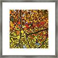 Autumn Maple Leaves Framed Print