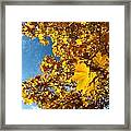 Autumn Splendor 9 Framed Print
