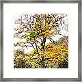 Autumn Tree Framed Print