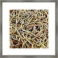 Bacteria In Bird Droppings, Sem Framed Print by Science Photo Library