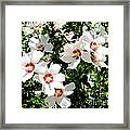 Beautiful Hibiscus Framed Print