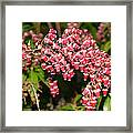 Beginning Spring  Framed Print