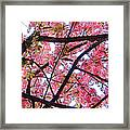 Blossoms And Bark Framed Print