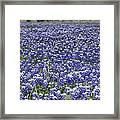 Blue Bonnet Carpet V7 Framed Print