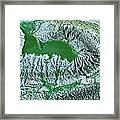 Blue-green Algae Framed Print