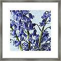 Bluebells 2 Framed Print