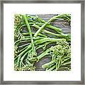 Broccoli Stems Framed Print