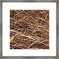 Brown Reeds Framed Print