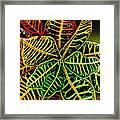 Cadiaeum Crotons Tropical Houseplant Shrub Framed Print