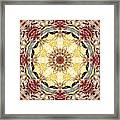 Cecropia Sun 4 Framed Print