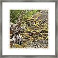 Cheakamus Rainforest Debris Framed Print