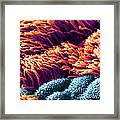 Cilia In Lung, Sem Framed Print