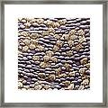 Ciliated Cells In Trachea, Sem Framed Print