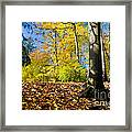 Colorful Fall Autumn Park Framed Print