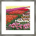 Colors Of Holland Framed Print