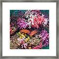 Coral Reef Scenery Framed Print